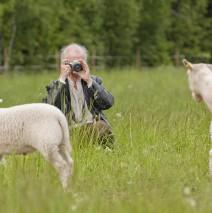 Konstnärsträff i fårhagen